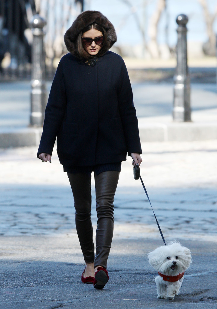 Actress Olivia Palermo enjoyed a stroll with her dog Mr. Butler through the West Village area of New York City, New York on February 9, 2012.