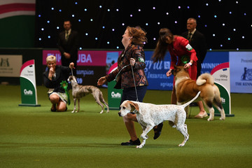 Chilli 2018 Crufts Dog Show Day Four - Best In Show