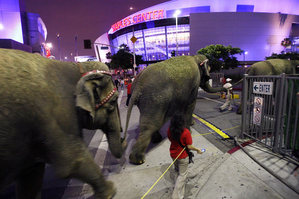 Circus Elephants Arrive At Staples Center Hours Before