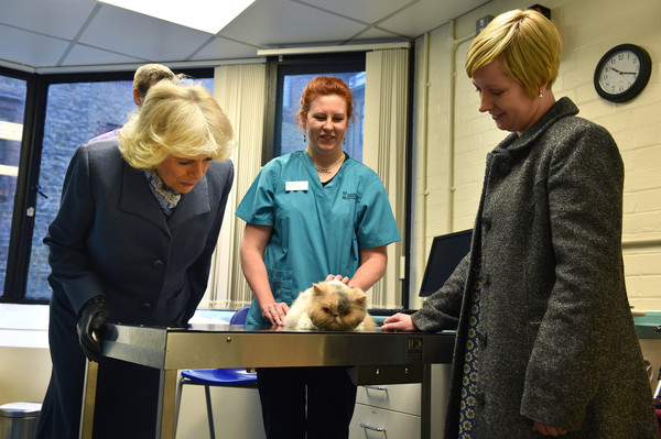 Camilla, Duchess of Cornwall meets Jessica the cat. a pet of the Fluin Family on February 26, 2015 in London, United Kingdom. HRH The Duchess of Cornwall was on a visit to Beaumont Sainsbury Animal Hospital, at the Royal Veterinary College in Camden, North London, where she met staff, students and patients. Her visit enabled her to see how the Animal Care Trust (of which she is Patron) funds state of the art animal care.