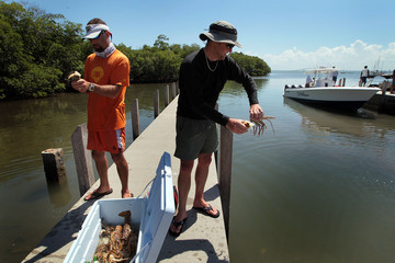 Mark Campbell Florida's Recreational 2-Day Lobster Season Begins