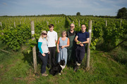 Harvest At The Most Northerly Commercial Vineyard In England