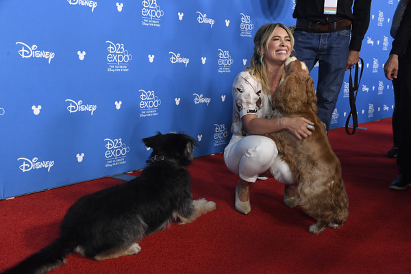 D23 Expo 2019 [lady and the tramp,dog,canidae,fur,dog breed,conformation show,carpet,carnivore,puppy,hilary duff,anaheim convention center,california,d23 expo,d23 disney showcase]