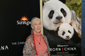 Jane Goodall Dr. Jane Goodall, Director Lu Chuan and Producers Roy Conli and Brian Leith Arrive at the New York Premeire of Disneynature's 'Born in China'