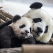Meng Yuan European Best Pictures Of The Day - January 29