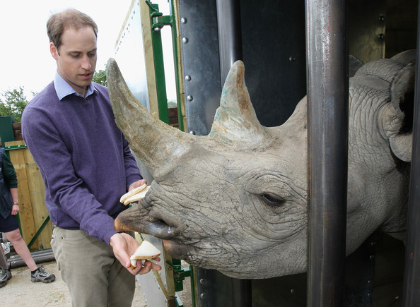 Prince William Rhino