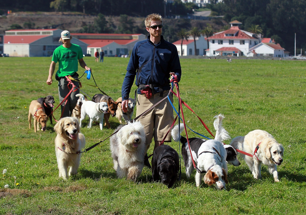 Ky faubion in san francisco seeks to license professional for Puppy dog walker