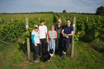 Sarah Bennett Harvest At The Most Northerly Commercial Vineyard In England