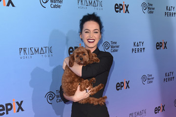 Katy Perry Brings Her Pooch to the Red Carpet