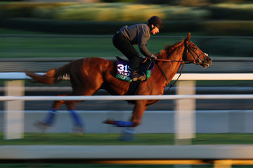 Ulysses 2016 Breeders' Cup World Championships - Previews