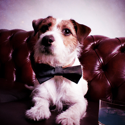 Indispensible Product of the Day: Reversible Pet Bow Ties