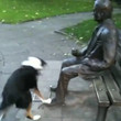 Dog Fetches Stick for Statue Video