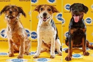 Meet the Adorable Puppies That Will Participate in the 12th Annual Puppy Bowl