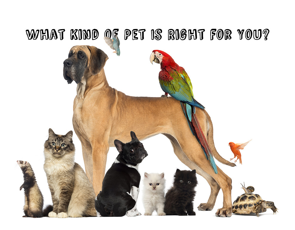 What Kind Of Pet Is Right For You