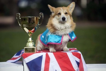 According to a Bunch of Caped Corgis, the Next Royal Baby Will Be Named...
