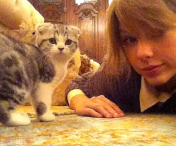 taylor swift u0026 39 s cat is named after meredith grey