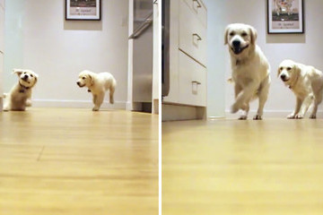 Watch an Adorable Time-Lapse Video of Two Puppies Running for Their Dinner
