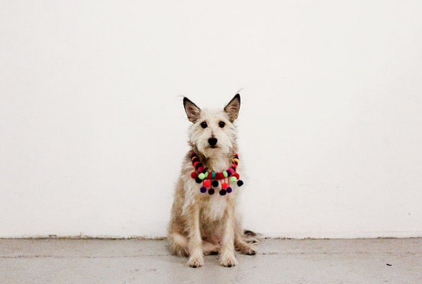 This Dog Model Is the Best, What Tim Gunn Thinks of Your Outfit, and More!