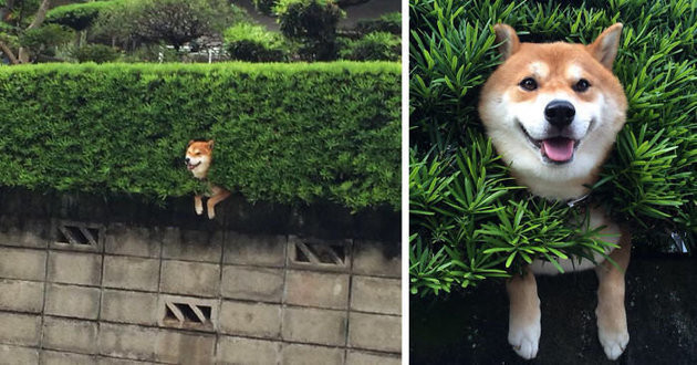 10 Dogs Getting Stuck in Weird-Ass Places
