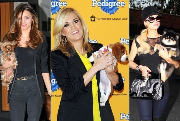 Celebrity Pet Owners