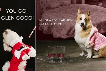 We Can't Handle These Dogs Dressed Up as Your Favorite 'Mean Girls' Characters