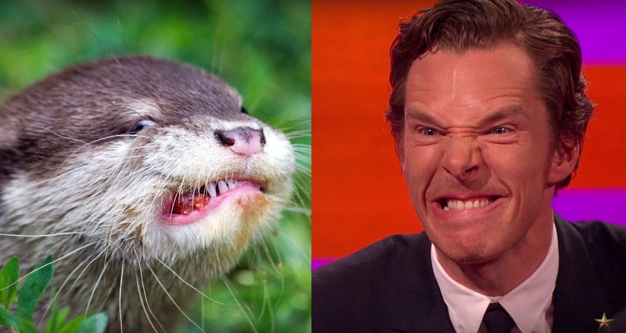 Benedict Cumberbatch Does the Best Otter Impression You've Ever Seen