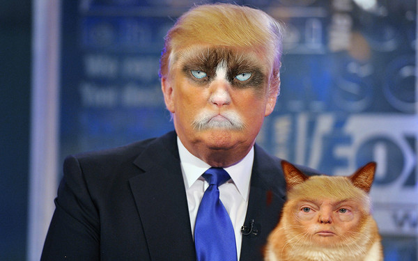 Image result for trump cat