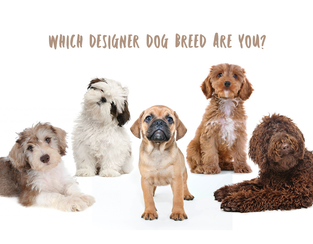 Which Designer Dog Breed Are You