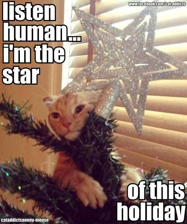 Are Christmas Trees Bad For Cats: These 20 Cats In Christmas Trees Will Give You Life