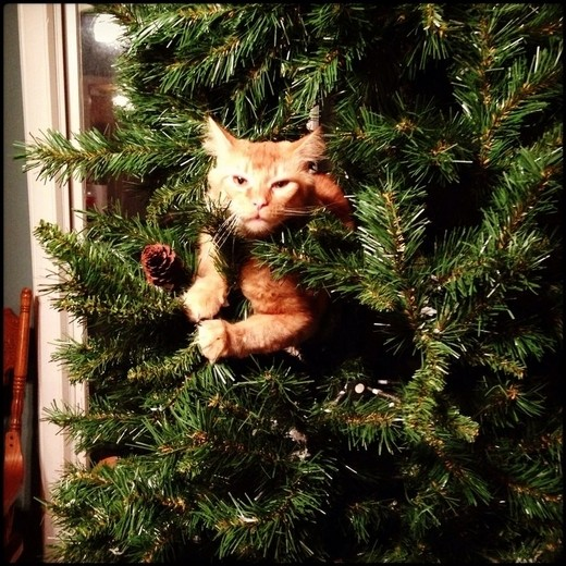 These 20 cats in christmas trees will give you life for Christmas tree cat tower