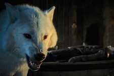 Ghost Is Too Loyal to Ghost on Jon Snow