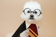 Brilliant Halloween Costumes for Your Dog