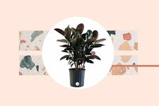 These House Plants Can Make You Healthier