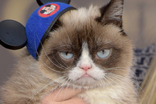 Do You Know the Names of These Famous Instagram Cats?