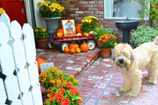 Fall Decor Ideas For Your Home